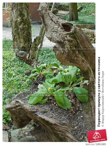 Первоцвет примула у святого источника, фото № 249689, снято 12 апреля 2008 г. (c) Федор Королевский / Фотобанк Лори