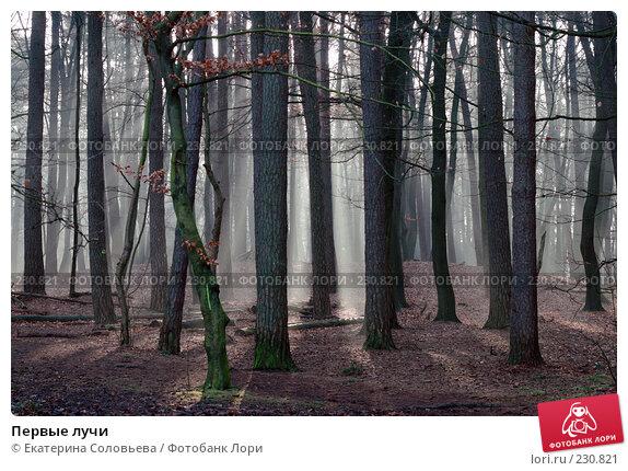 Первые лучи, фото № 230821, снято 29 февраля 2008 г. (c) Екатерина Соловьева / Фотобанк Лори