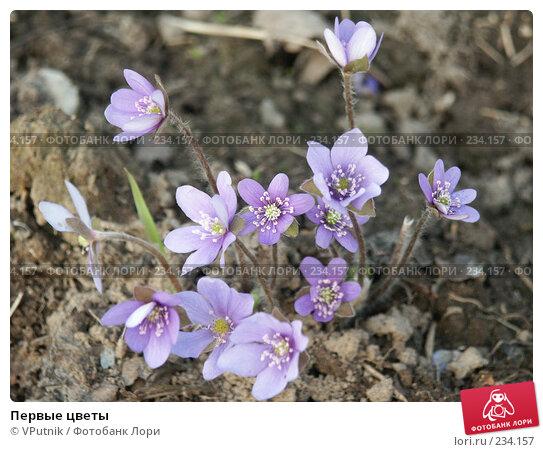 Первые цветы, фото № 234157, снято 4 мая 2005 г. (c) VPutnik / Фотобанк Лори