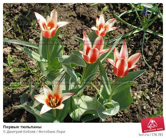 Первые тюльпаны, фото № 178781, снято 21 мая 2006 г. (c) Дмитрий Кобзев / Фотобанк Лори