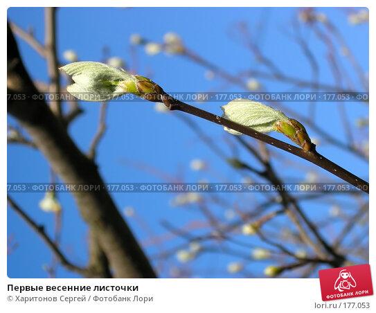 Первые весенние листочки, фото № 177053, снято 15 апреля 2006 г. (c) Харитонов Сергей / Фотобанк Лори