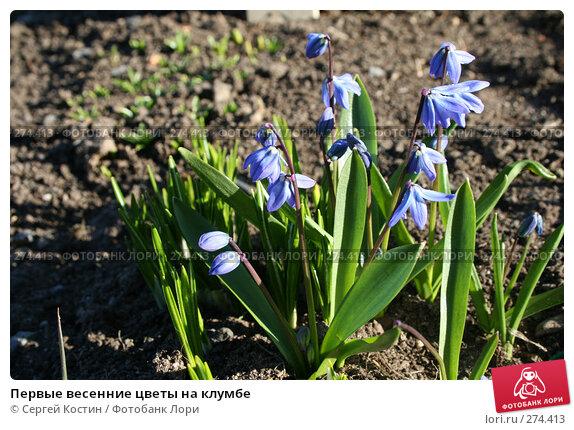 Первые весенние цветы на клумбе, фото № 274413, снято 3 мая 2008 г. (c) Сергей Костин / Фотобанк Лори