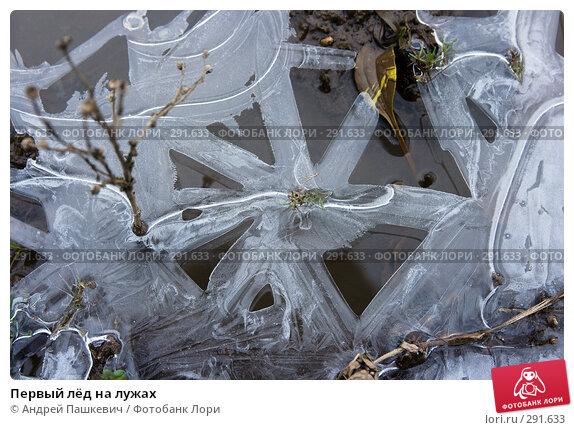 Первый лёд на лужах, фото № 291633, снято 19 января 2017 г. (c) Андрей Пашкевич / Фотобанк Лори