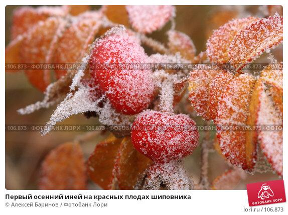 Первый осенний иней на красных плодах шиповника, фото № 106873, снято 31 октября 2007 г. (c) Алексей Баринов / Фотобанк Лори