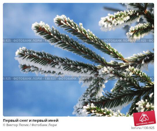 Первый снег и первый иней, фото № 130925, снято 21 ноября 2007 г. (c) Виктор Пелих / Фотобанк Лори