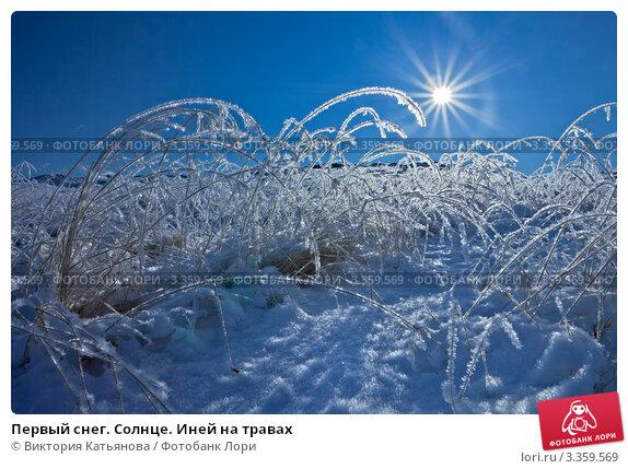 Первый снег. Солнце. Иней на травах. Стоковое фото, фотограф Виктория Катьянова / Фотобанк Лори