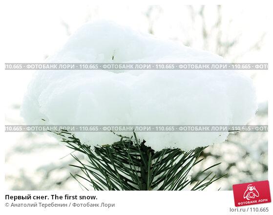 Первый снег. The first snow., фото № 110665, снято 4 ноября 2007 г. (c) Анатолий Теребенин / Фотобанк Лори