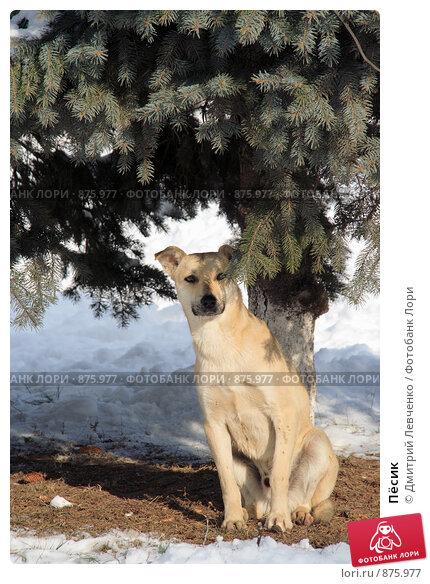 Пёсик. Стоковое фото, фотограф Дмитрий Левченко / Фотобанк Лори