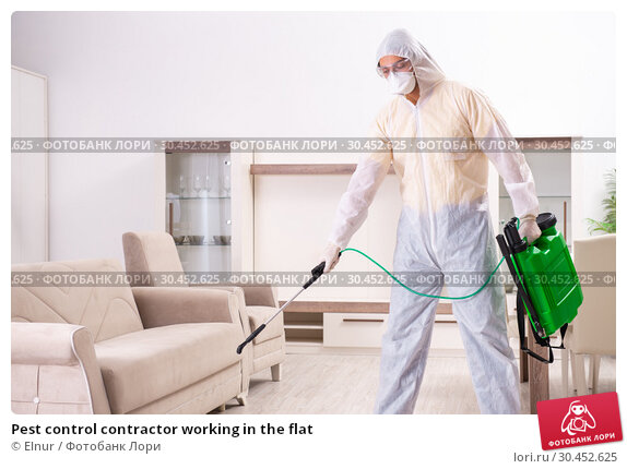 Pest control contractor working in the flat. Стоковое фото, фотограф Elnur / Фотобанк Лори