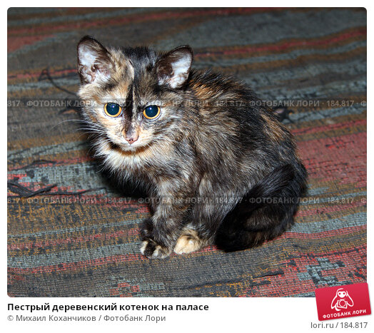 Пестрый деревенский котенок на паласе, фото № 184817, снято 7 января 2008 г. (c) Михаил Коханчиков / Фотобанк Лори