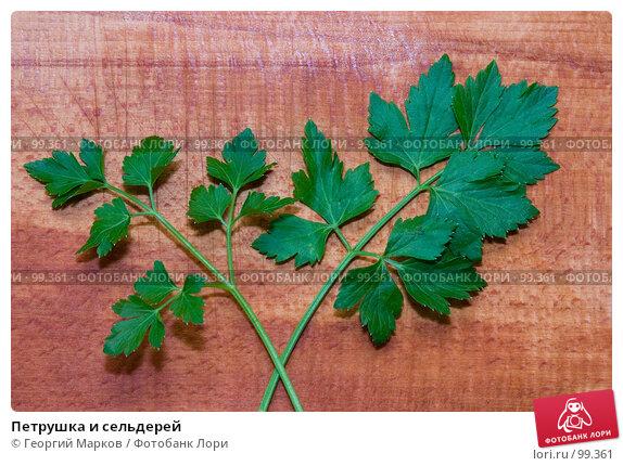 Петрушка и сельдерей, фото № 99361, снято 13 октября 2005 г. (c) Георгий Марков / Фотобанк Лори