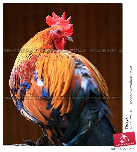 Купить «Петух», фото № 274213, снято 4 июня 2007 г. (c) Константин Тавров / Фотобанк Лори