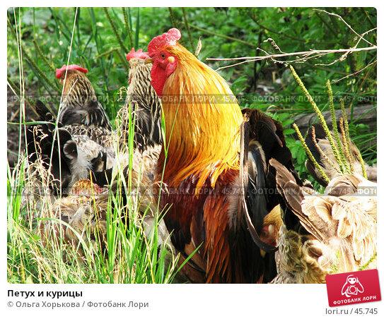 Петух и курицы, фото № 45745, снято 30 июля 2006 г. (c) Ольга Хорькова / Фотобанк Лори