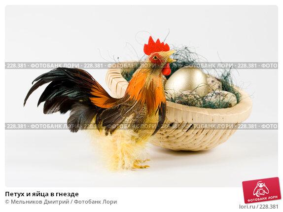 Петух и яйца в гнезде, фото № 228381, снято 9 марта 2008 г. (c) Мельников Дмитрий / Фотобанк Лори
