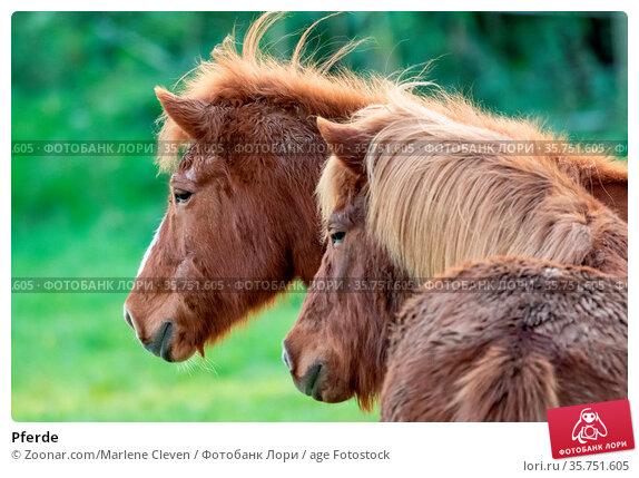 Pferde. Стоковое фото, фотограф Zoonar.com/Marlene Cleven / age Fotostock / Фотобанк Лори