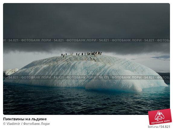 Пингвины на льдине, фото № 54821, снято 6 февраля 2007 г. (c) Vladimir / Фотобанк Лори