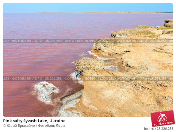Купить «Pink salty Syvash Lake, Ukraine», фото № 28226253, снято 9 августа 2017 г. (c) Юрий Брыкайло / Фотобанк Лори