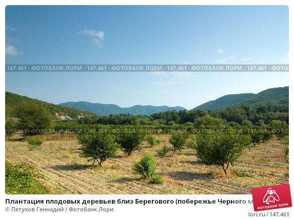 Плантация плодовых деревьев близ Берегового (побережье Черного моря), фото № 147461, снято 8 августа 2007 г. (c) Петухов Геннадий / Фотобанк Лори
