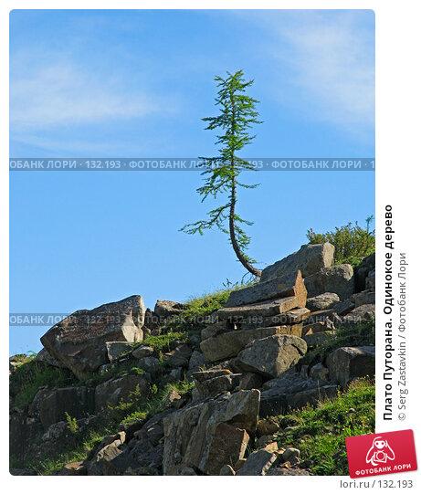 Плато Путорана. Одинокое дерево, фото № 132193, снято 15 июля 2004 г. (c) Serg Zastavkin / Фотобанк Лори