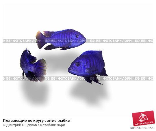 Плавающие по кругу синие рыбки, фото № 139153, снято 24 июля 2017 г. (c) Дмитрий Ощепков / Фотобанк Лори