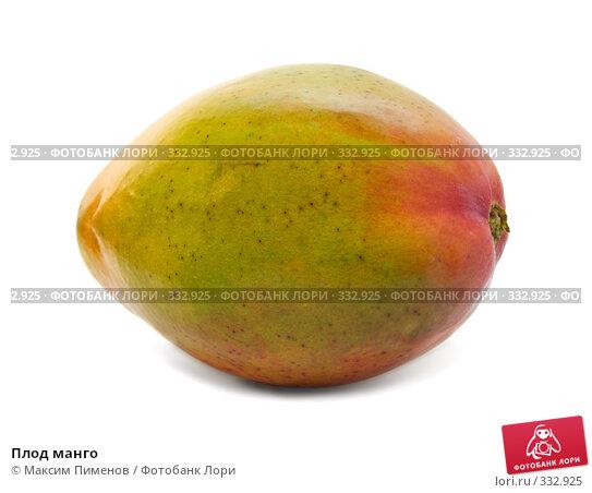 Купить «Плод манго», фото № 332925, снято 20 марта 2008 г. (c) Максим Пименов / Фотобанк Лори