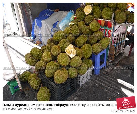 Купить «Плоды дуриана имеют очень твёрдую оболочку и покрыты мощными колючками», фото № 30323689, снято 1 марта 2019 г. (c) Валерий Денисов / Фотобанк Лори