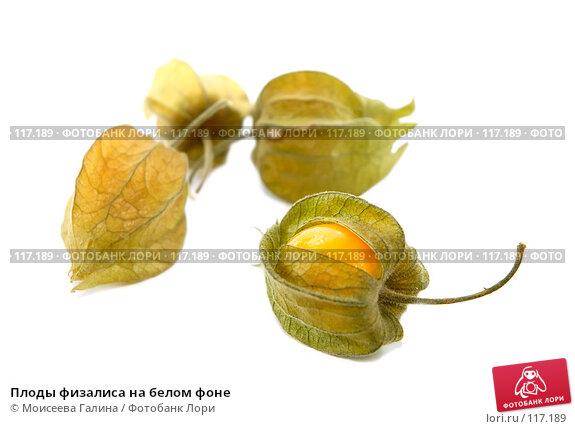 Плоды физалиса на белом фоне, фото № 117189, снято 14 октября 2007 г. (c) Моисеева Галина / Фотобанк Лори