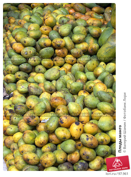 Плоды манго, фото № 97961, снято 11 июня 2007 г. (c) Валерий Шанин / Фотобанк Лори