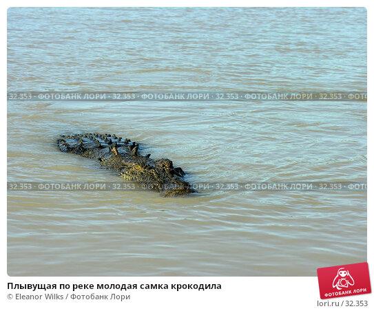 Плывущая по реке молодая самка крокодила, фото № 32353, снято 21 июня 2006 г. (c) Eleanor Wilks / Фотобанк Лори