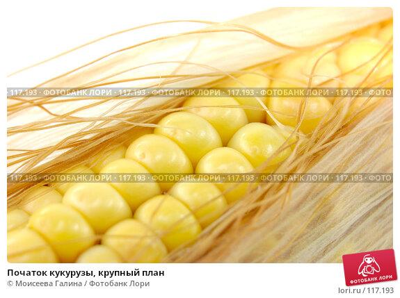 Початок кукурузы, крупный план, фото № 117193, снято 14 октября 2007 г. (c) Моисеева Галина / Фотобанк Лори