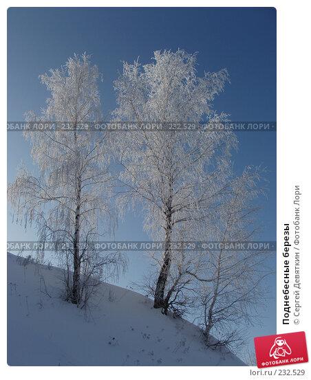 Поднебесные березы, фото № 232529, снято 8 февраля 2008 г. (c) Сергей Девяткин / Фотобанк Лори