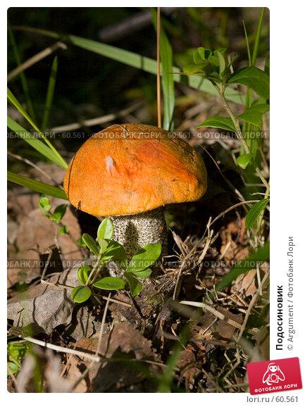 Подосиновик, фото № 60561, снято 23 июня 2007 г. (c) Argument / Фотобанк Лори