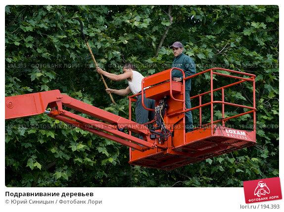 Подравнивание деревьев, фото № 194393, снято 19 июня 2007 г. (c) Юрий Синицын / Фотобанк Лори