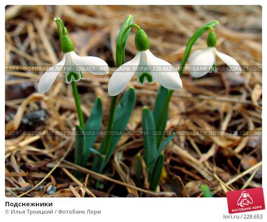 Подснежники, фото № 228653, снято 8 марта 2005 г. (c) Илья Троицкий / Фотобанк Лори