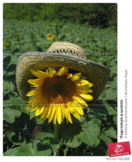 Подсолнух в шляпе, фото № 105669, снято 15 июля 2007 г. (c) Dmitriy Andrushchenko / Фотобанк Лори