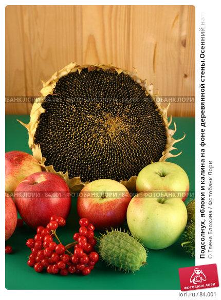 Подсолнух, яблоки и калина на фоне деревянной стены.Осенний натюрморт., фото № 84001, снято 4 сентября 2007 г. (c) Елена Блохина / Фотобанк Лори