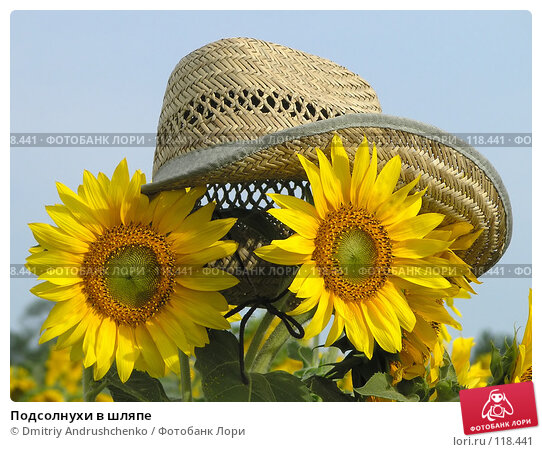 Подсолнухи в шляпе, фото № 118441, снято 28 июля 2007 г. (c) Dmitriy Andrushchenko / Фотобанк Лори