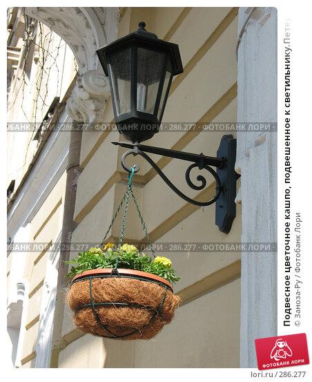Подвесное цветочное кашпо, подвешенное к светильнику.Петербург., фото № 286277, снято 11 мая 2008 г. (c) Заноза-Ру / Фотобанк Лори