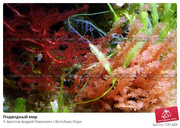 Подводный мир, фото № 121629, снято 12 ноября 2006 г. (c) Арестов Андрей Павлович / Фотобанк Лори