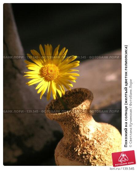 Похожий на солнце (желтый цветок гелиопсиса), фото № 139545, снято 23 июня 2017 г. (c) Светлана Кучинская / Фотобанк Лори