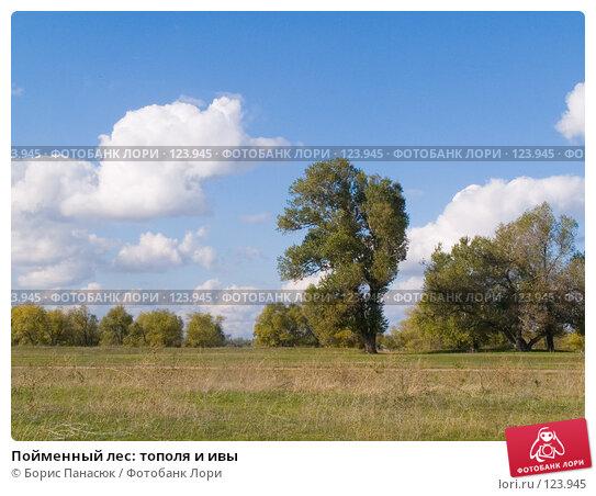 Пойменный лес: тополя и ивы, фото № 123945, снято 11 сентября 2006 г. (c) Борис Панасюк / Фотобанк Лори