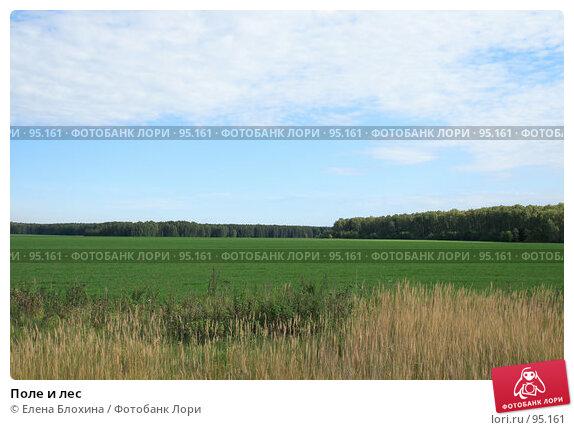 Поле и лес, фото № 95161, снято 22 сентября 2007 г. (c) Елена Блохина / Фотобанк Лори