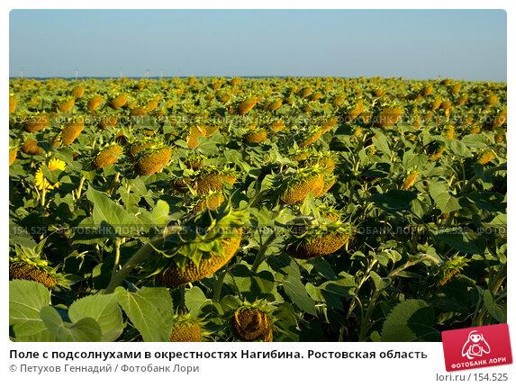 Поле с подсолнухами в окрестностях Нагибина. Ростовская область, фото № 154525, снято 5 августа 2007 г. (c) Петухов Геннадий / Фотобанк Лори