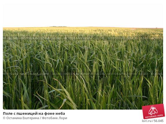 Поле с пшеницей на фоне неба, фото № 56045, снято 17 июня 2007 г. (c) Останина Екатерина / Фотобанк Лори