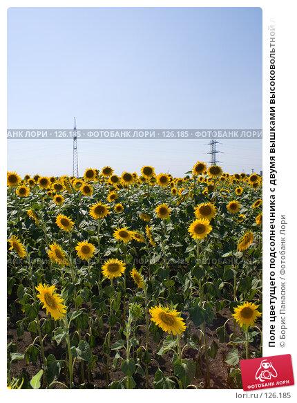 Поле цветущего подсолнечника с двумя вышками высоковольтной линии, фото № 126185, снято 18 июля 2007 г. (c) Борис Панасюк / Фотобанк Лори