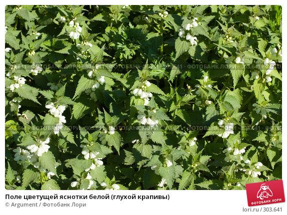 Поле цветущей яснотки белой (глухой крапивы), фото № 303641, снято 28 мая 2008 г. (c) Argument / Фотобанк Лори