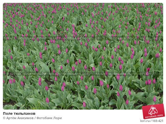 Поле тюльпанов, фото № 169421, снято 27 апреля 2006 г. (c) Артём Анисимов / Фотобанк Лори