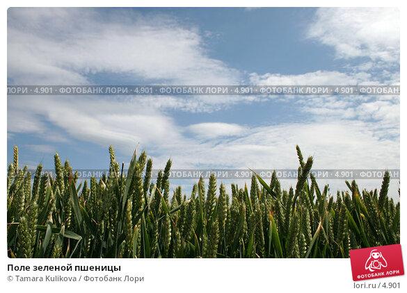 Поле зеленой пшеницы, фото № 4901, снято 24 июня 2006 г. (c) Tamara Kulikova / Фотобанк Лори