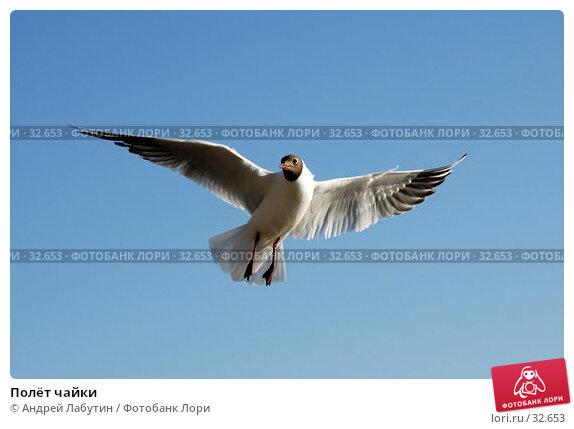Полёт чайки, фото № 32653, снято 14 апреля 2007 г. (c) Андрей Лабутин / Фотобанк Лори
