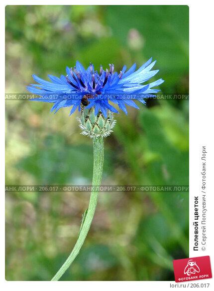 Полевой цветок, фото № 206017, снято 4 июня 2005 г. (c) Сергей Попсуевич / Фотобанк Лори